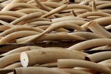 Hong Kong: chiuso il più grande mercato dell'avorio